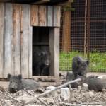 Зоопарк з дикими тваринами