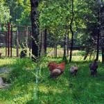 Міні-зоопарк з дикими та свійськими тваринами